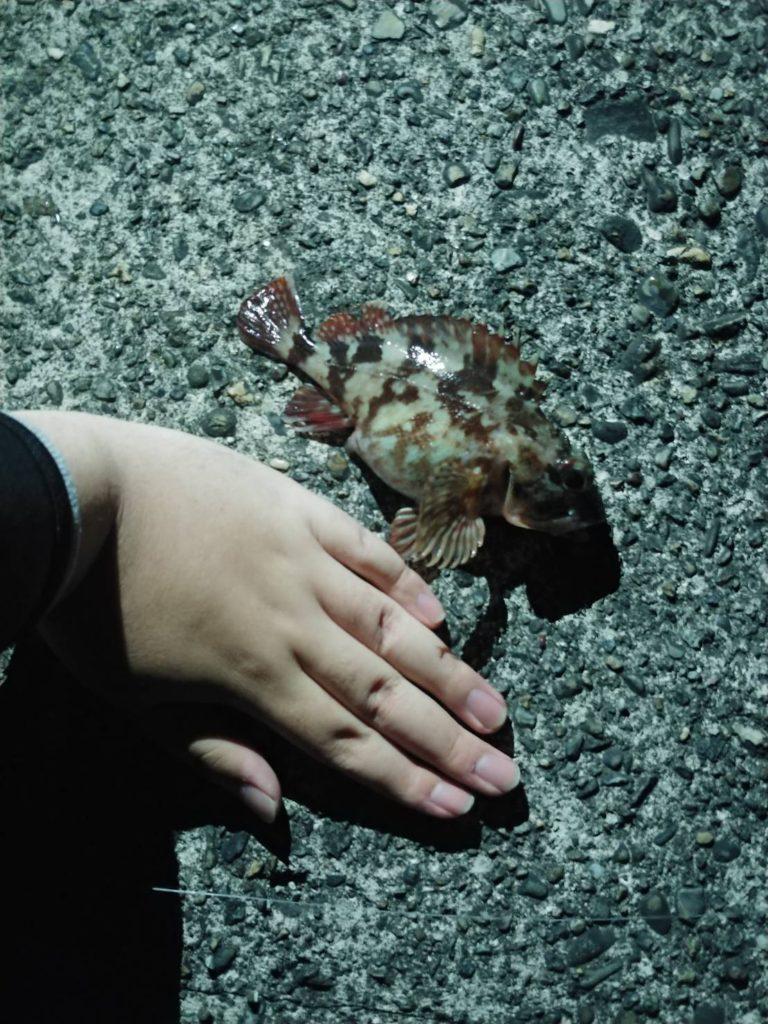 カサゴと手の大きさ比較