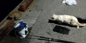 元根井漁港の猫